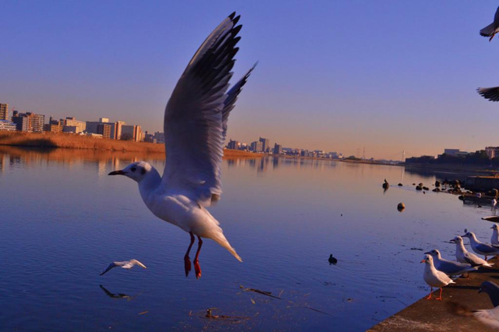 自分的癒しのスポット、多摩川について